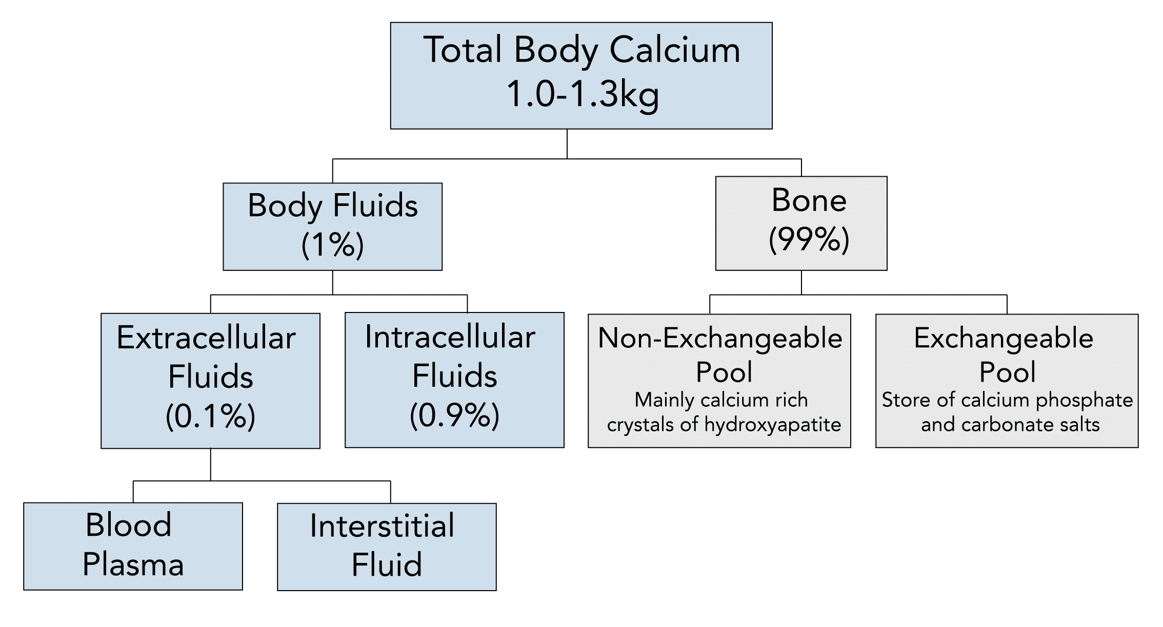 Calcium distribution and stores in the body