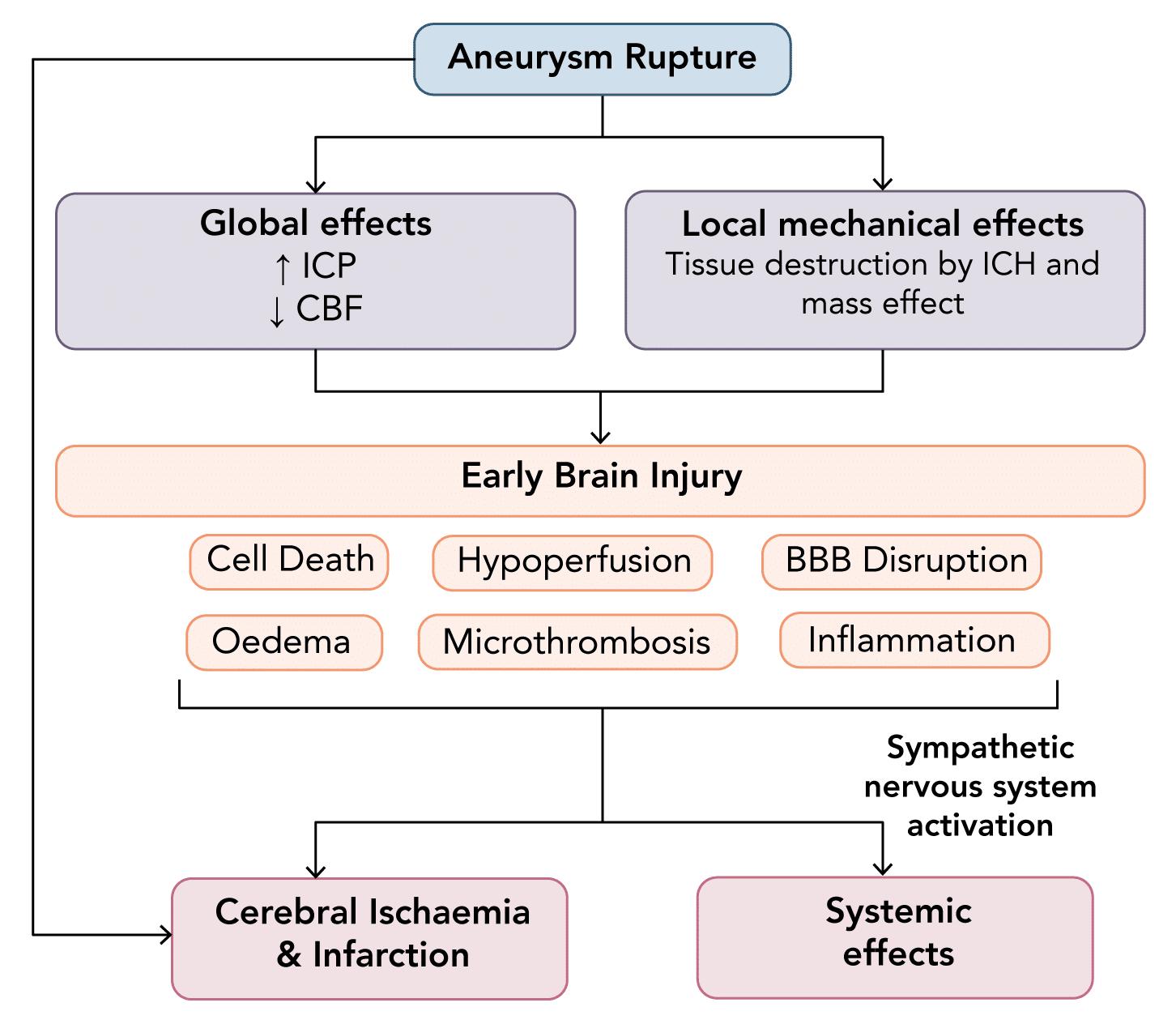 Pathophysiology leading to brain injury in subarachnoid haemorrhage (SAH)